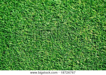 freshly lawn grass