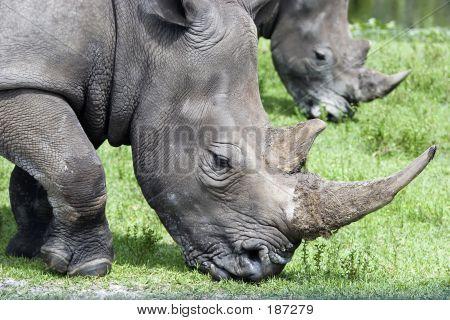 Rhino Mirror