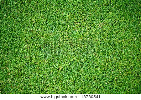 Overhead view of grass field