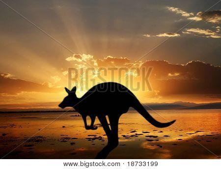 Känguru auf den Sonnenuntergang