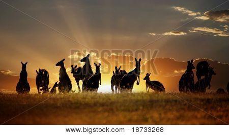 australische Outback-Känguru-Serie