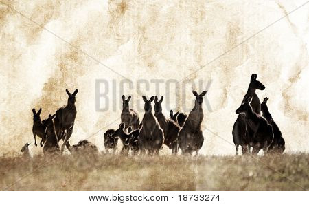 Australian outback kangaroo grunge series