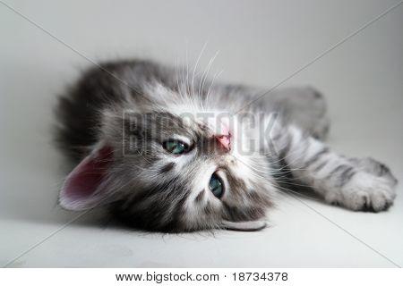 Kitten rests