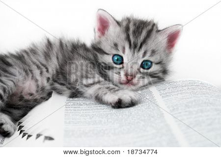 Kitten poses on book - isolated