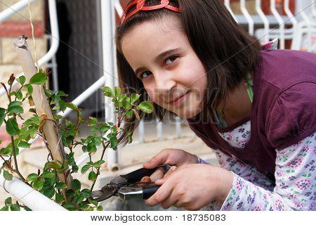 Little girl takes care of rose tree in garden