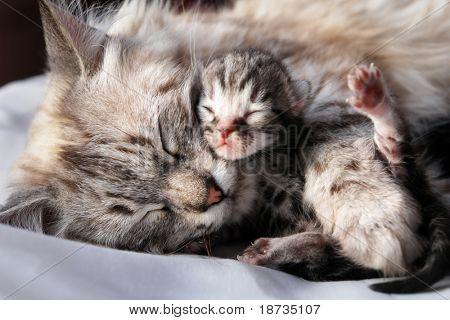 Katze und ihrem Neugeborenen Kätzchen
