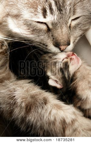 Mother cat kisses her daughter with compassion