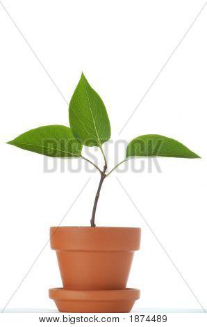Wachstum 3
