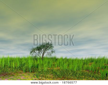 tree on the meadow under storm sky