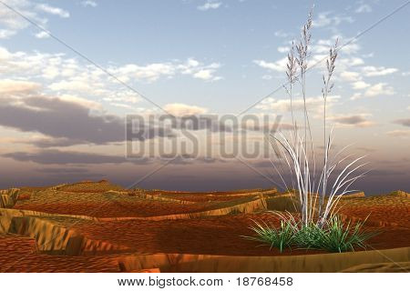 dry grass in desert