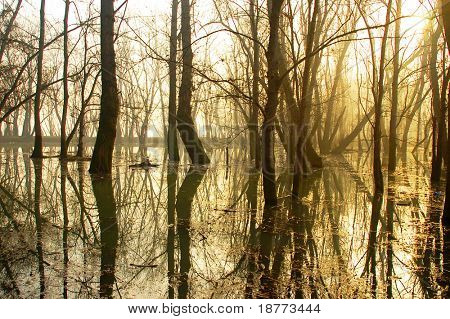 Trees with reflection in a swamp