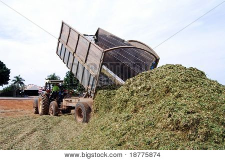 Silage emptied on the ground, used later as organic fodder at a huge cattle ranch in Brazil