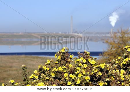 Yellow wildflowers in front of a waste water lake covered in oil, and heavy industry spewing air pollution in the background