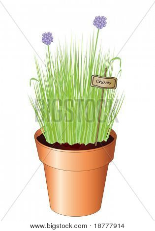 Vector illustration of potted chives isolated on white background. Also available as jpg.