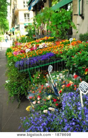 Flower Stand In Paris
