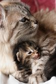 pic of funny animals  - Cat and kitten hugs - JPG