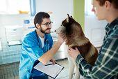 Vet clinician cuddling husky dog during medical treatment poster
