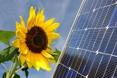 image of solar battery  - Sunflower and a solar energy panel - JPG