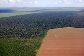 Deforestation in Brazil, aerial view of a large soy field eating into the tropical rainforest