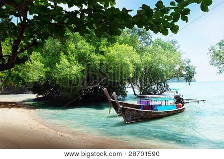 Baum in Wasser und langen Boote am Strand in thailand