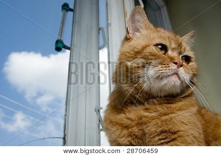 Red Cat Sitting Against  An Old Window