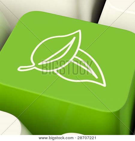 Leaves Icon Computer Key In Green Showing Recycling And Eco Frie