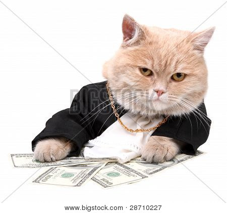 Red Cat Sitting On The Dollar On The White Background