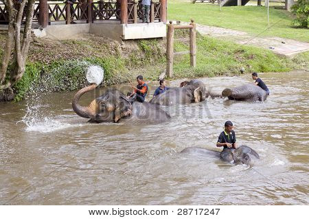 Elephants bathing in the river