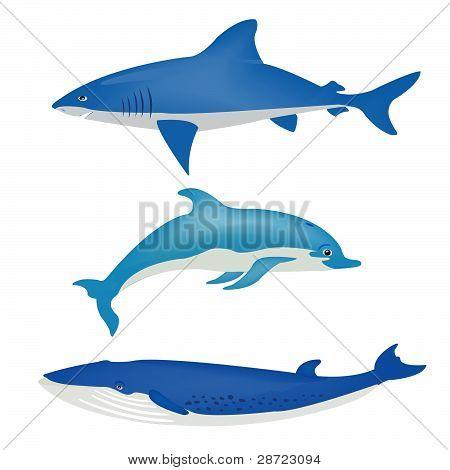 Sea Animals On White