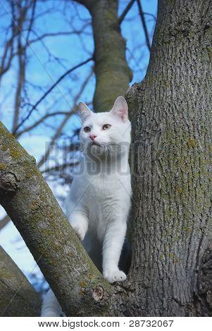 Treed Cat.
