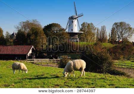 Veere meadow scene