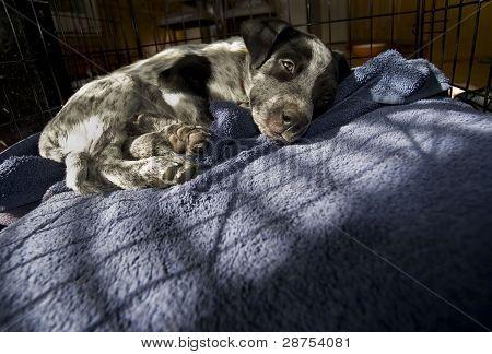 Adopt This little Puppy.