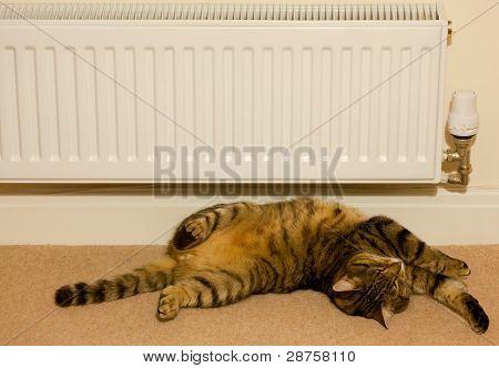 Gato quente