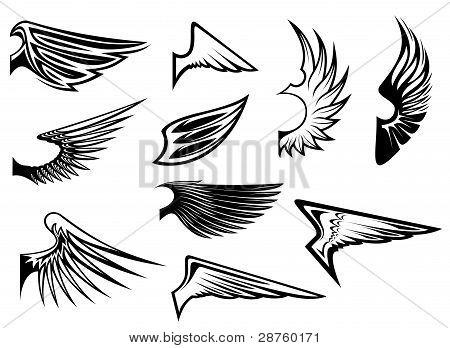 Satz von heraldischen Flügel