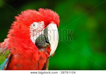 Parrot With Funny Hair