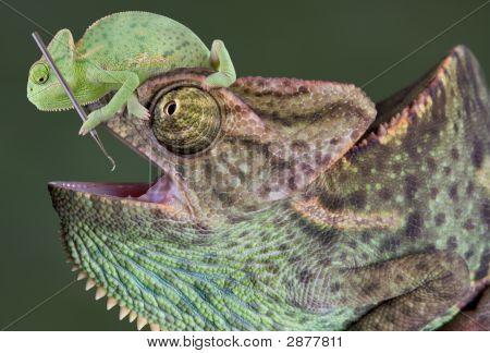 Chameleon Dental Work