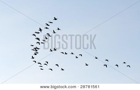 Flying birds in winter