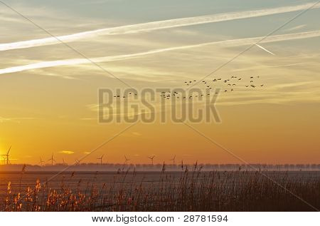 Flying birds at dawn in winter