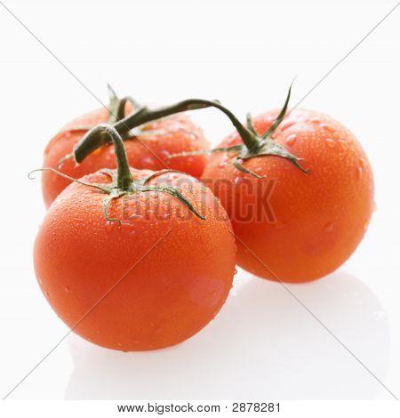 Tomaten stilleben.