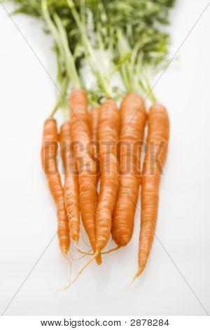 Reihe von Karotten.