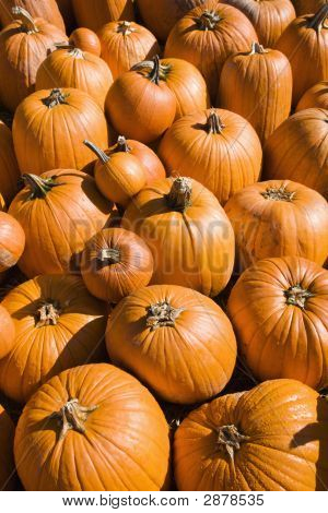 Pile Of Pumpkins.