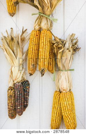 Fall Corn Decorations.