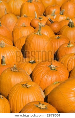 Fall Pumpkins.