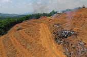 Deforestation. Smoke and fire as rainforest cut and burned for palm oil industry   poster