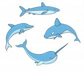 Set Of Vector Underwater Life With Killer Whale, Shark, Narwhal And Dolphin. Sea Creatures Isolated  poster