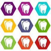 Canine Tooth Icons 9 Set Coloful Isolated On White For Web poster