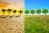 Dry country with cracked soil and meadow with tree. Concept of change climate or global warming. poster