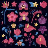 Tropical Rainforest Flowers. Cartoon Exotic Night Flower Set. Botanical Illustration With Exotic Pla poster