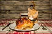 An Adorable Kitten Stealing The Holiday Dinner poster