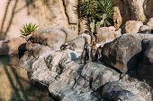 Pinguins On Rocks On Sunlight In Zoological Park, Barcelona, Spain poster